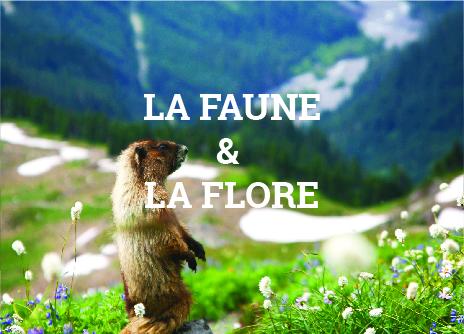 La faune et la flore